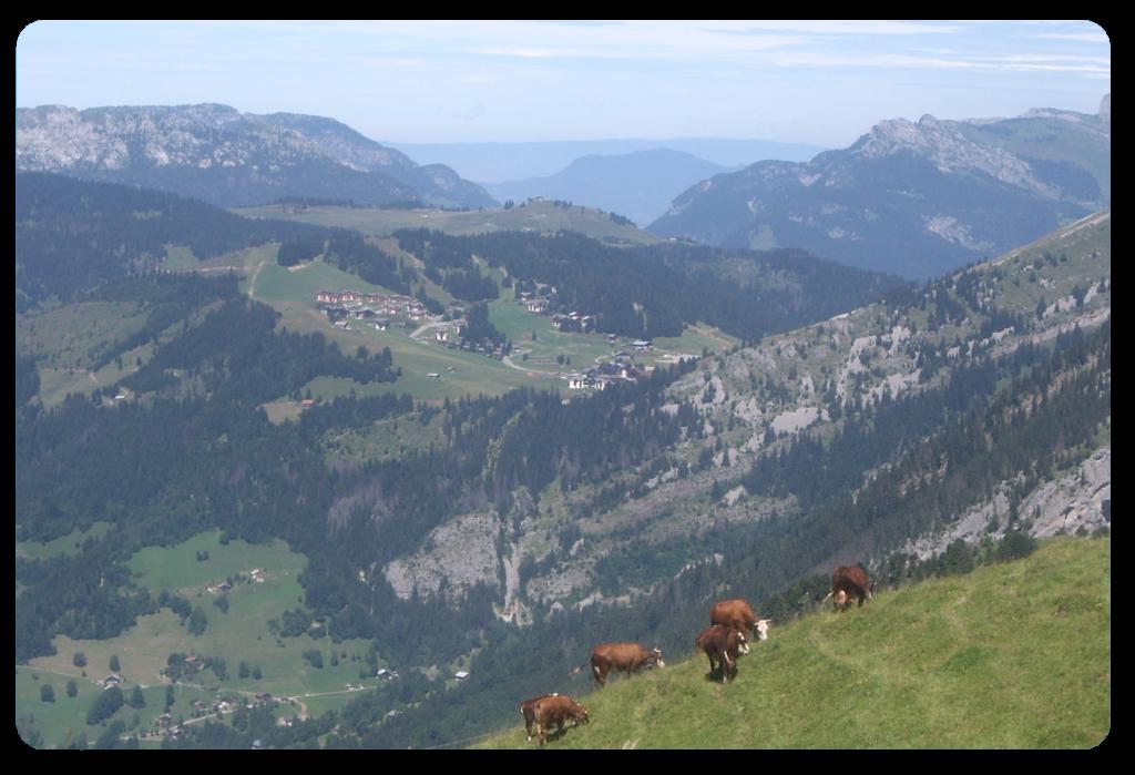 Balade-Montagne-Manigod-été